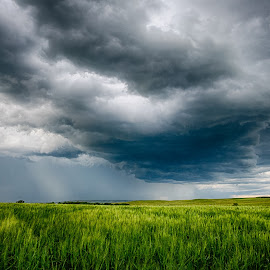 Green Wheat Under Stormy Skies by Kendra Perry Koski - Landscapes Prairies, Meadows & Fields ( storm, storm cell, green, wide open spaces, tripp county, clouds, dakotawindsphoto.com, summer, farmland, agriculture, dakota winds photography, 2018, winner, june, blue, hdr, farming, south dakota, farm, hdr efex, wheat, grain, thunderstorm, us,  )