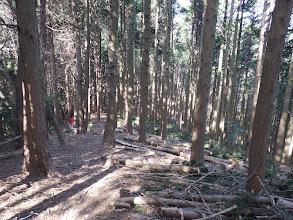 右に間伐林