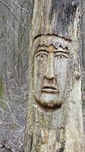 Photo: Les arbres sculptés de la forêt de Ferrières