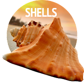 Wallpapers with shells