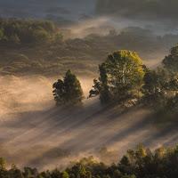 Luce del mattino tra gli alberi di