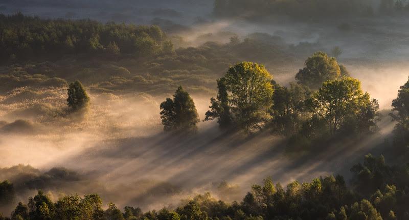 Luce del mattino tra gli alberi di Atum-Pietro