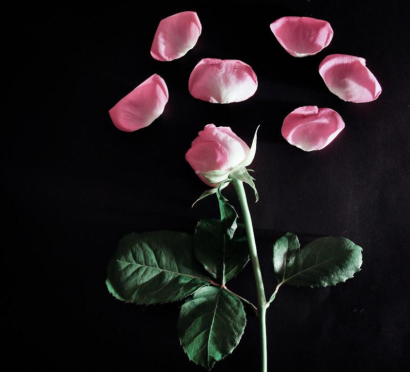 Più rosa di così! di rosy_greggio