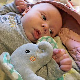 Just Me and My Elephant by Sandy Stevens Krassinger - Babies & Children Babies ( baby, fingers, boy, elephant, toy, hand )