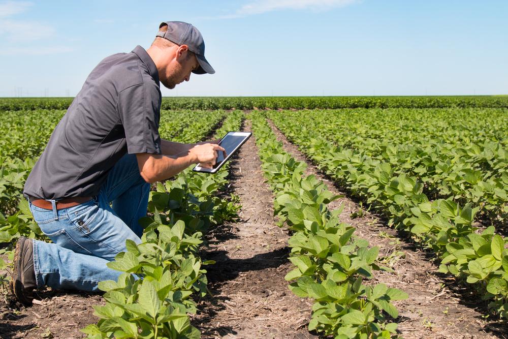 Homem ajoelhado na plantação analisando tablet