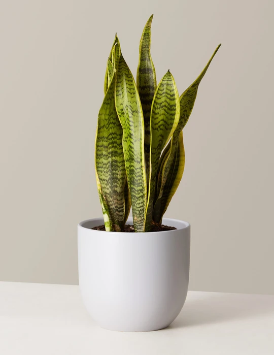 The Sill plant contactless gifts