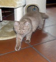 Photo: Samson mit 4 Monaten im neuen Zuhause