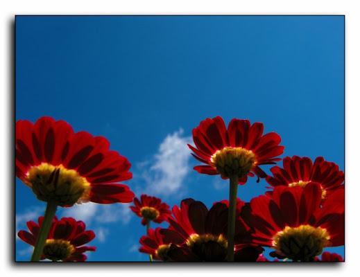 Red  blue di irvan