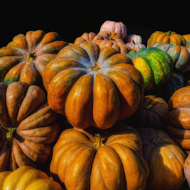 Great Pumpkin Pie by Dave Walters - Food & Drink Fruits & Vegetables ( pumpkins, gardens, fall, nature up close, lumix fz2500, colors,  )