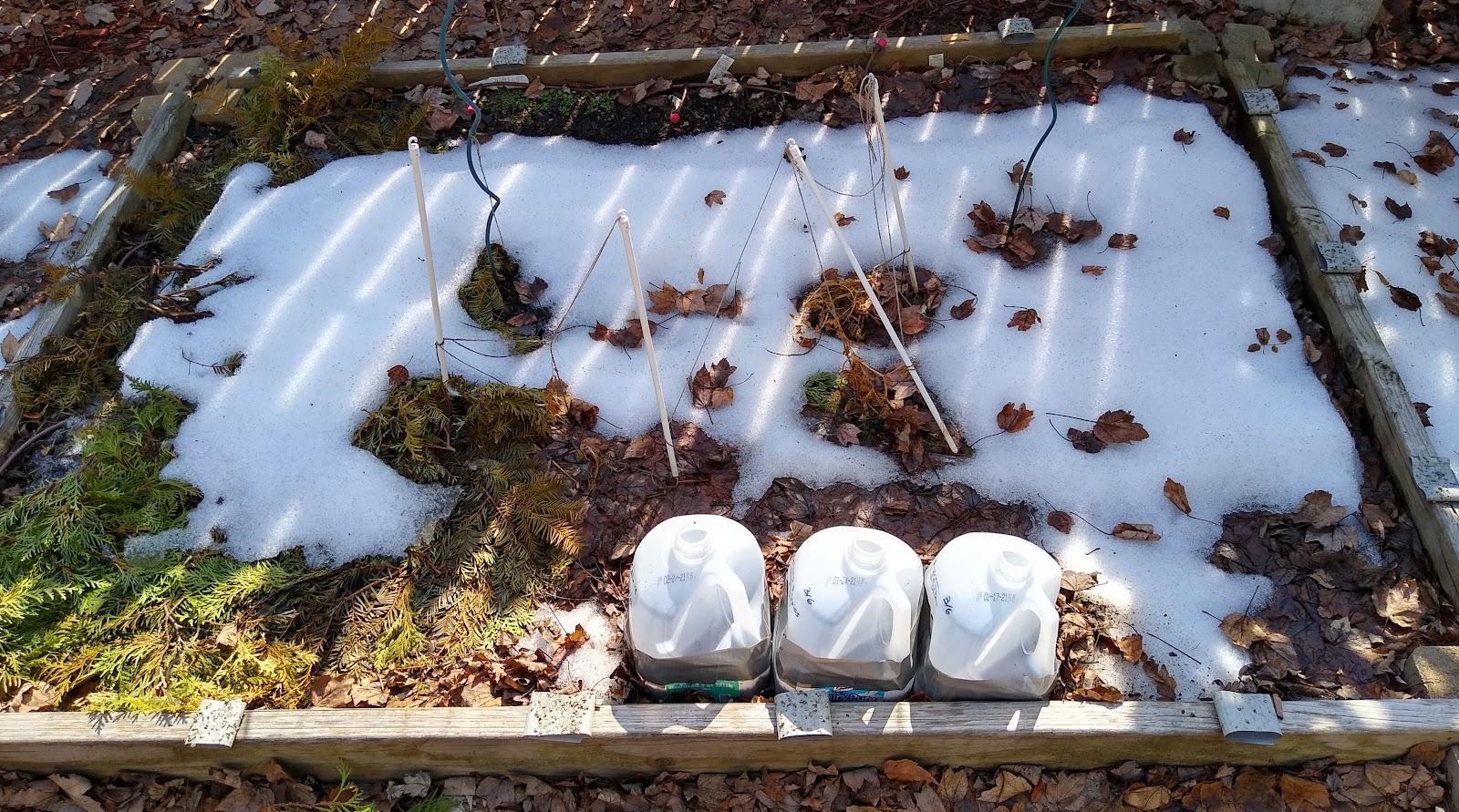 winter sowing in a raised bed veggie garden