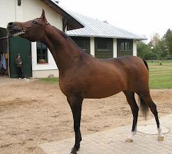 Photo: BA010163 Janow Podlaski - stadnina koni