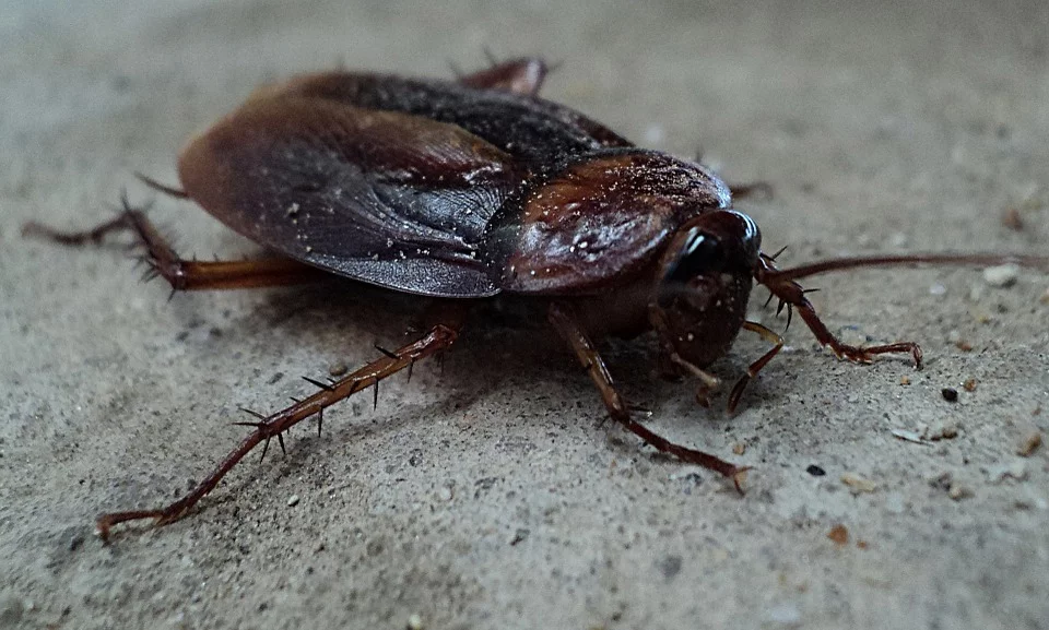 let aaa exterminating in indianapolis indiana help you solve your roach problem