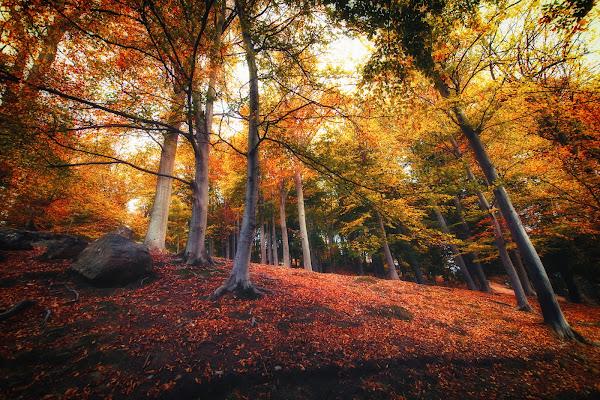 Foliage di IsideB