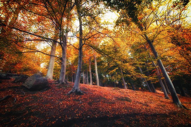 Foliage di Barbara Surimi