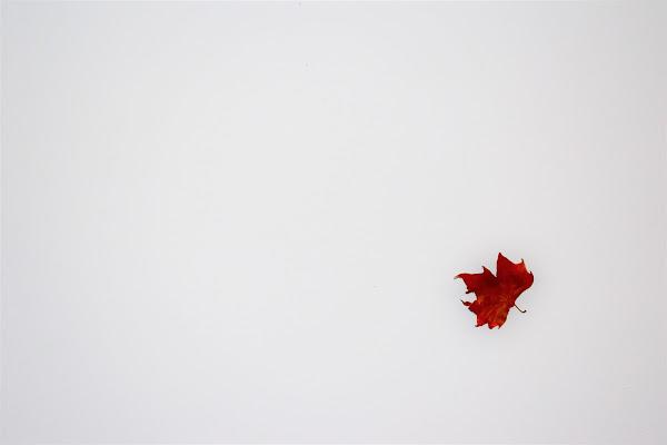Una foglia........ed é già autunno. di marinafranzone
