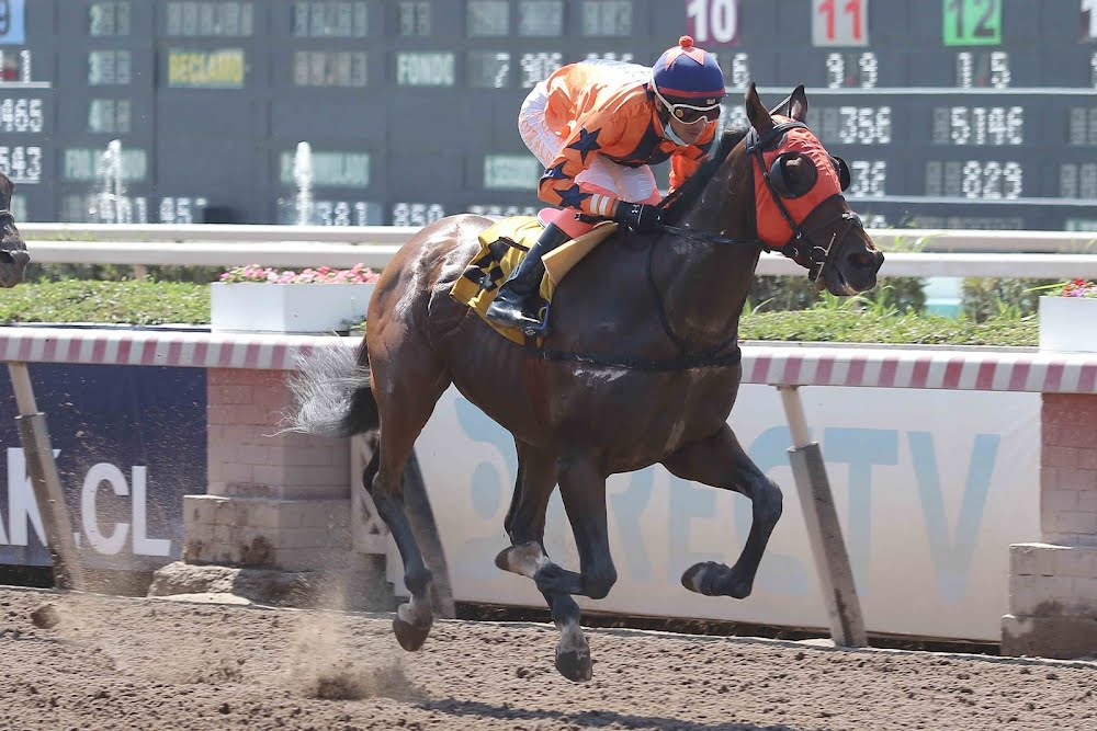 Nebak (Seeking The Dia) se impuso en Handicap (1200m-Arena-HCH). - Staff ElTurf.com
