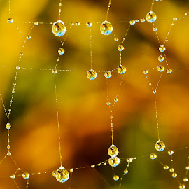 Sparkling web.. by Pete G. Flores - Nature Up Close Webs ( water, reflection, web, round, yellow, refection, circle.sparkling, spiderweb )