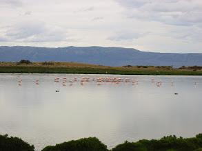 Photo: Wild flamingos