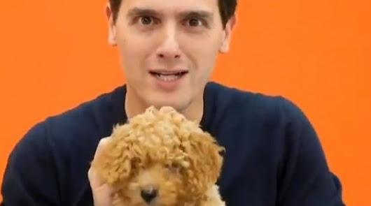 Lucas: los memes sobre el perro de Cs y Albert Rivera
