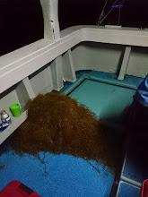 Photo: まだ暗がりの中・・・全く水面見えません。 プロペラに「流れ藻」が巻いて。