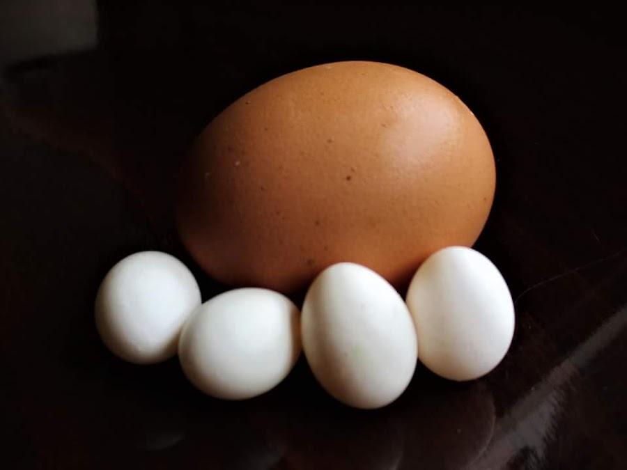 by Dragan Peric - Food & Drink Ingredients ( eggs, parrot )