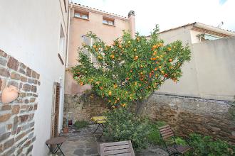 Photo: Mandarinerne er modne i December.