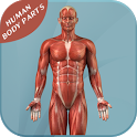 Human Body Parts icon