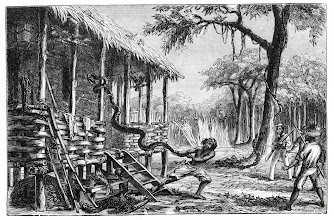 Photo: 'Ejecting an intruder'. A woodcut from Alfred Russel Wallace's book 'The Malay Archipelago'. Wallace is the figure holding the gun. Copyright George Beccaloni