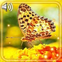 Butterflies Bright Live Wallpaper icon