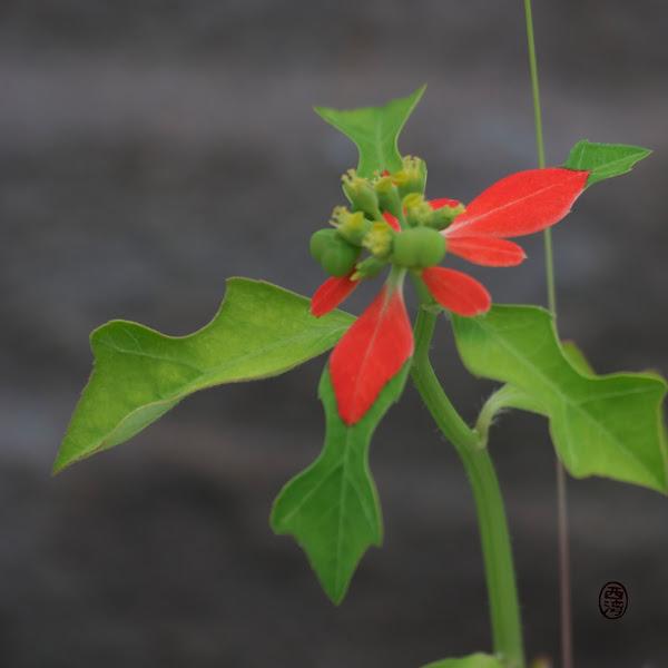 Photo: #220 - Red Leaf