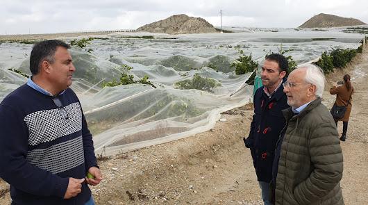 El granizo de la borrasca causó daños de 3 millones sobre 600 hectáreas