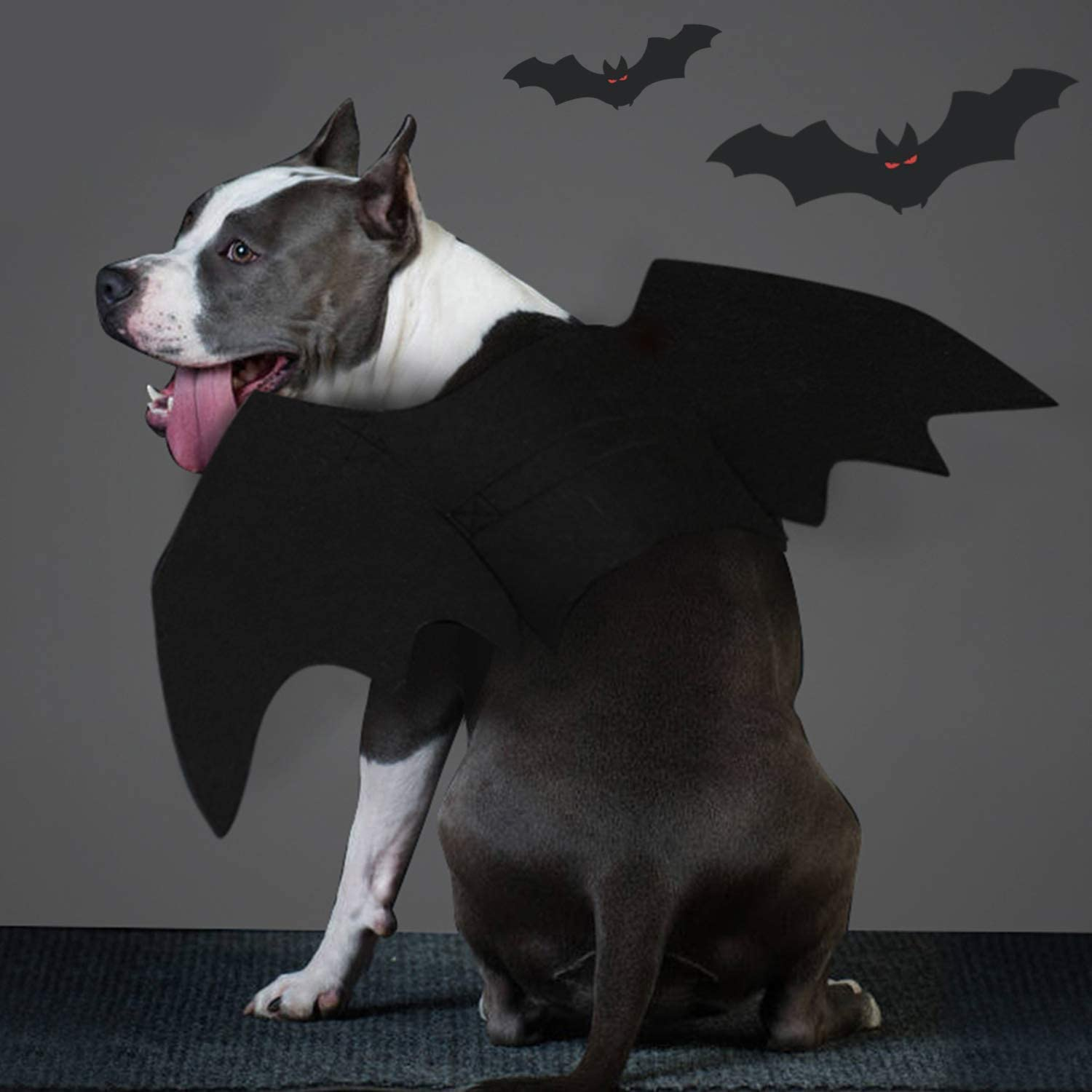 Dog in a bat wing Halloween costume