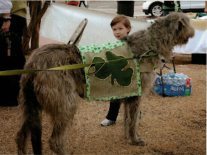 Photo: 3-15-2014 Boy petting Lucy after St Patrick's Parade
