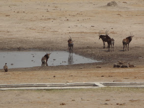 Photo: Sables watching their friend get wet