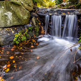 by Keith Sutherland - Nature Up Close Water ( beacon hill park     victoria     stream )