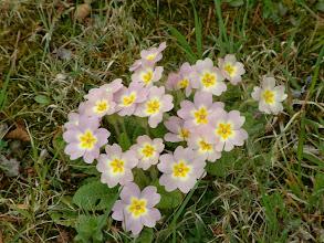 Photo: E' arrivata la primavera