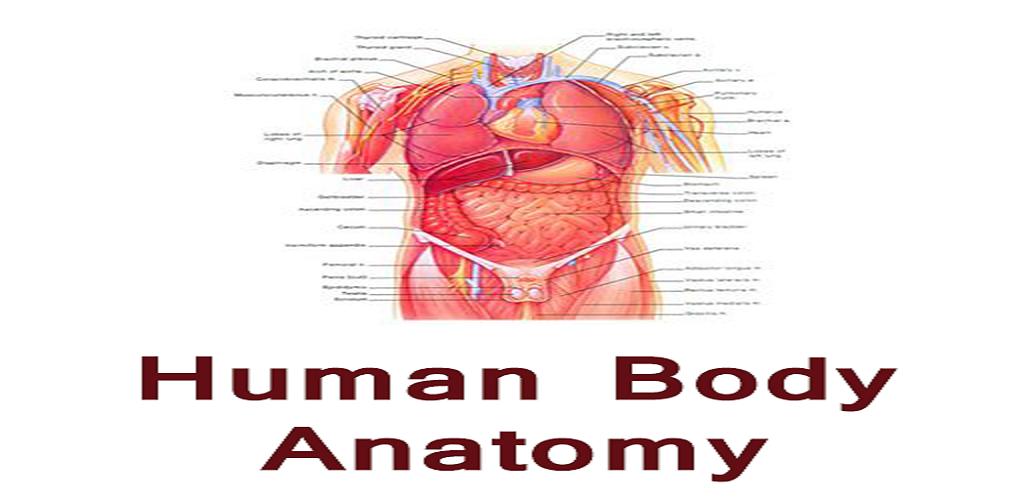 Human Body Anatomy Hindi Apk Download Comanslatorapps