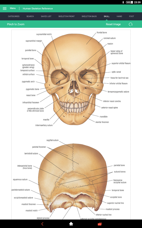 Vintage Anatomy Skeleton Images Manual Guide