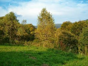 Photo: Listnaté stromy dostávají podzimní odstíny
