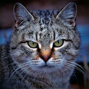 cat04-.jpg