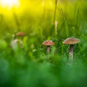 Little World by Baltă Mihai - Nature Up Close Mushrooms & Fungi ( nikon, macro, close up, grass, fotoworld, mushroom, sun )