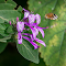 Nectar pixoto.jpg