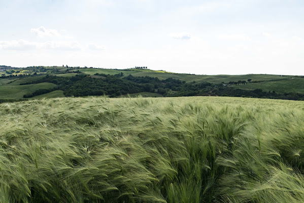 Val d'Orcia di Wolfy47