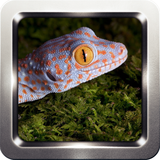 Tokay Gecko Sounds 音樂 LOGO-玩APPs