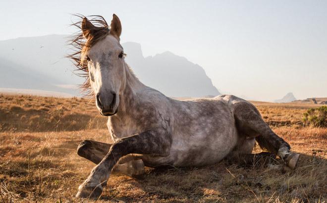 Thiên nhiên hoang dã tại vườn quốc gia Sehlabathebe, Lesotho, châu Phi.