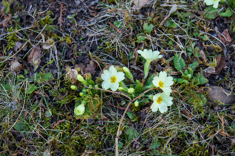 """Photo: Daily Shoot Assignment 155 (2012/03/09)  """"Spring is approaching in the Northern Hemisphere. Make any photo that shows new life!""""  http://www.allmyplus.com/dailyshoot/assignment/dailyshoot155  #dailyshoot #dailyshoot155 +DailyShoot+"""