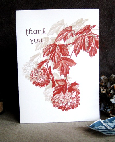 Red Hydrangea Thank you card