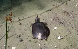 cropped turtle