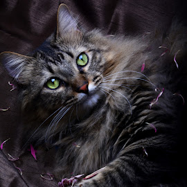 I'm Ready For My Close-Up by Chandal Chenier - Animals - Cats Portraits ( cat, flower petals, portrait, brown )