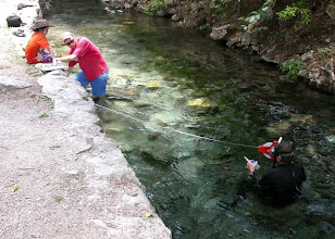 Photo: Invertebrate survey at Comal Springs, Landa Park, New Braunfels, Comal Co., Texas